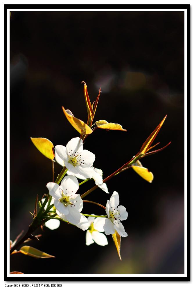 【流年】尘世之花(散文二题)
