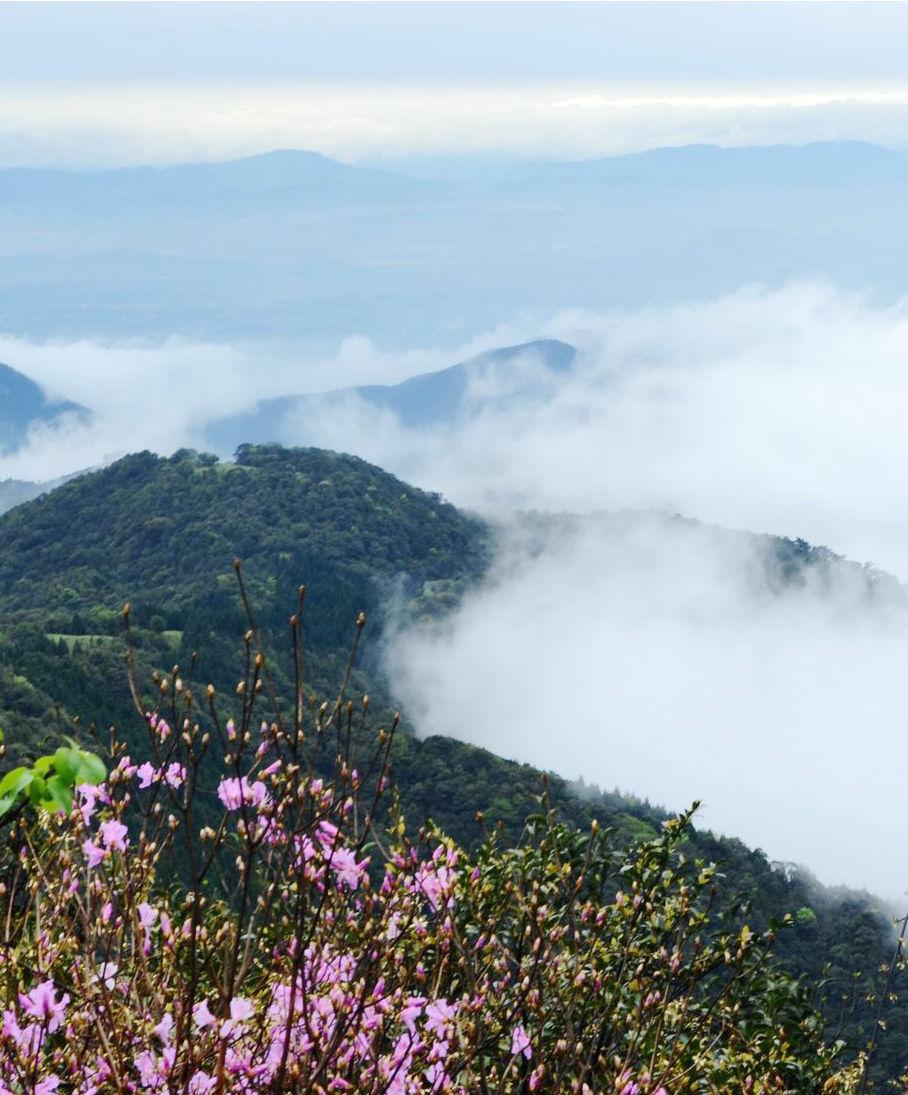 隐隐可见大容山峰顶的电视塔;仰望巍巍容山