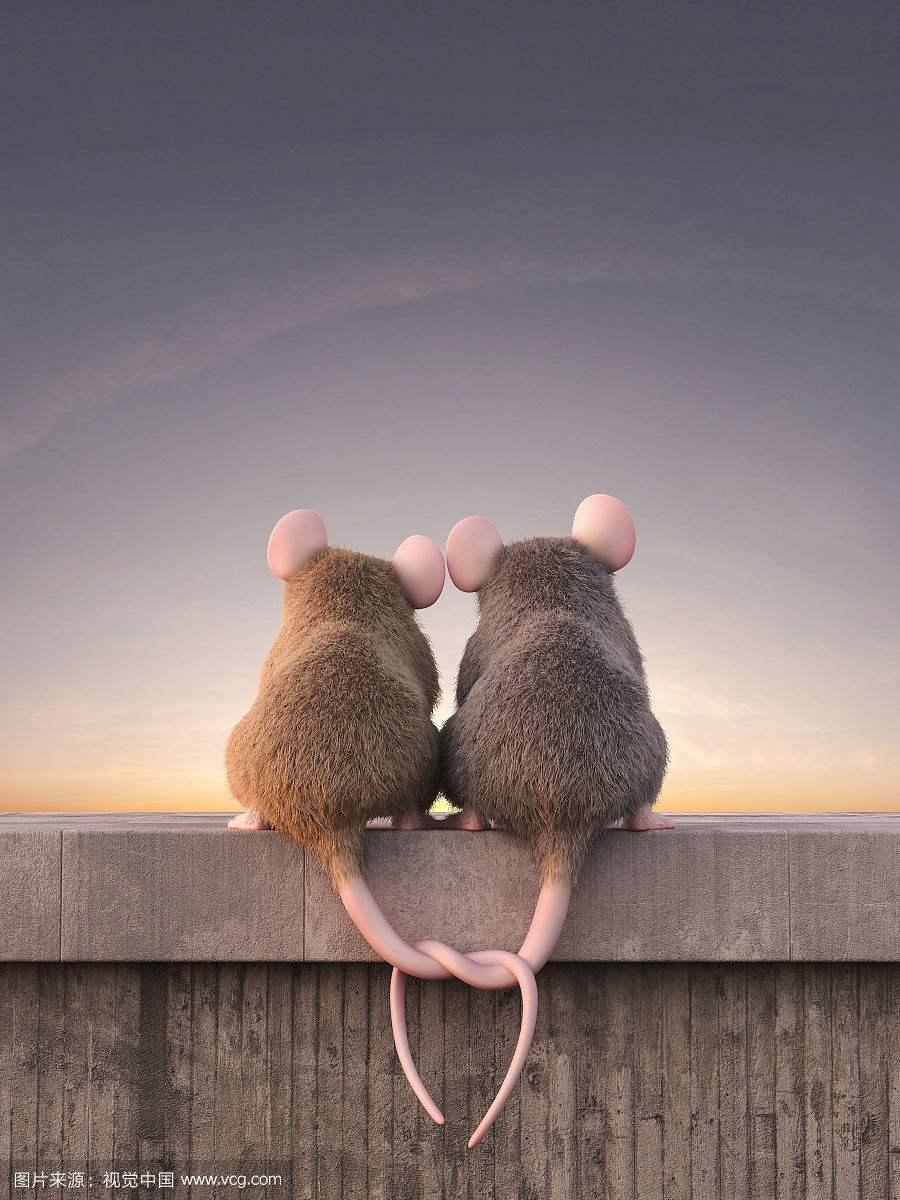 【看点】都是老鼠惹的祸(小说)