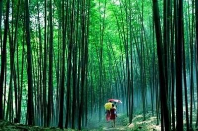 壁纸 风景 森林 植物 桌面 400_266