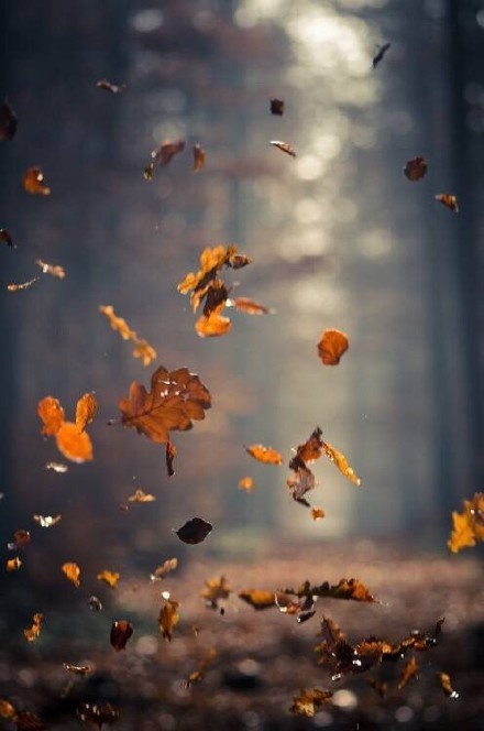 正在落叶的树图片大全