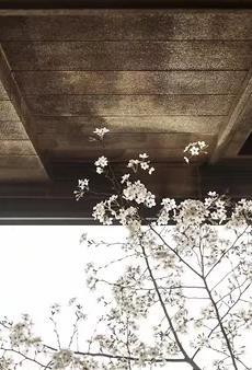 【流年】漫行记(组诗)