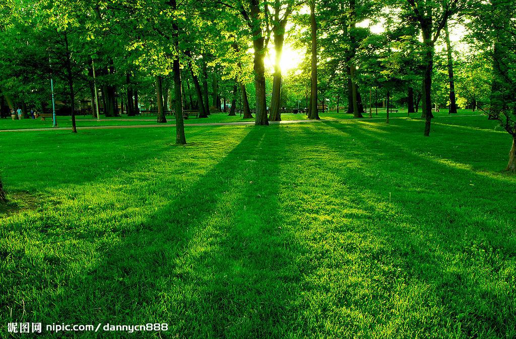 松树,柏树还有枫树等等都在半山腰和山下.