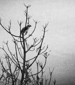 【流年】且看飞鸟川(散文)