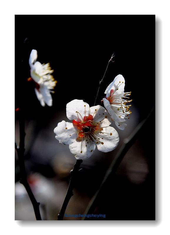 【流年】开往春天的花朵(散文外一篇)