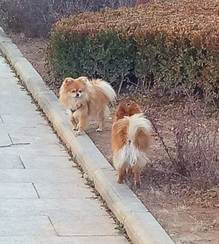 【柳岸·幸运】狗之恋(散文)