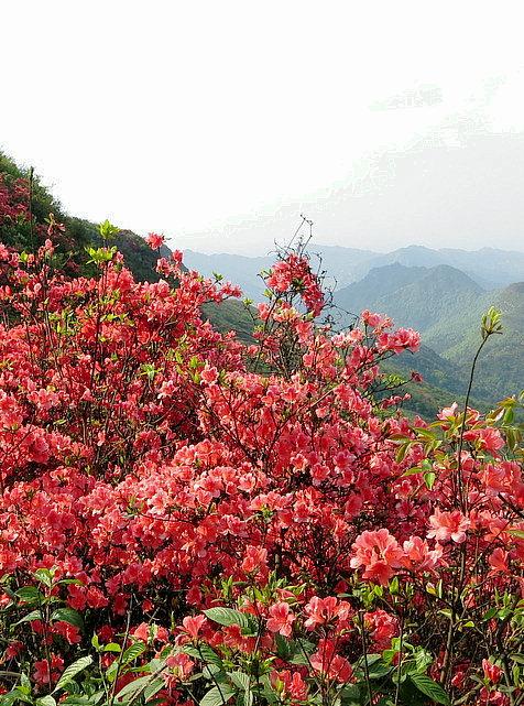 【雀巢】花朵们,树木们,动物们(散文外一题)