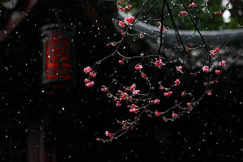会声会影 花瓣雨素材