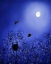 捋一把月光...