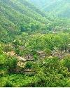 庙庄的上树林