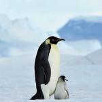 想飞的企鹅