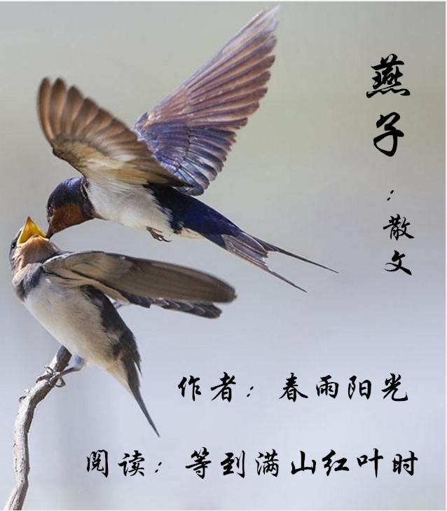 燕子(散文)