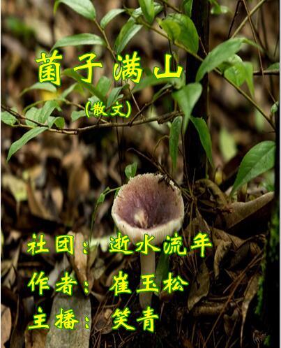菌子满山(散文)