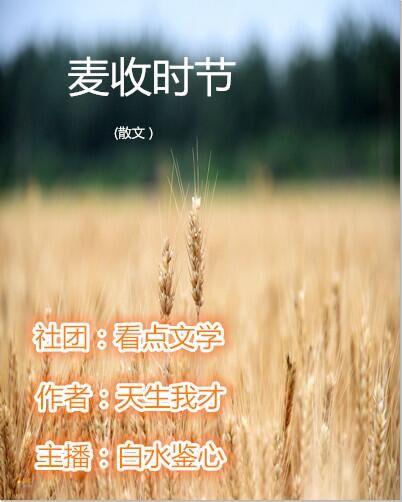 麦收时节(散文)
