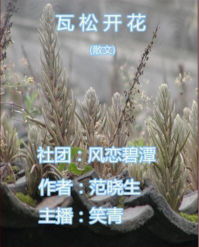 瓦松开花(散文)