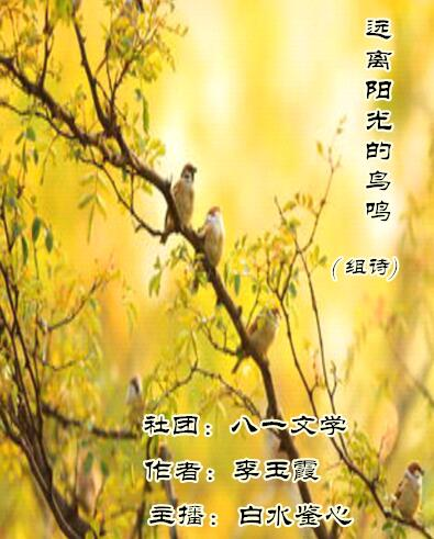 远离阳光的鸟鸣(组诗)