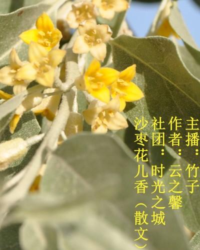 沙枣花儿香(散文)