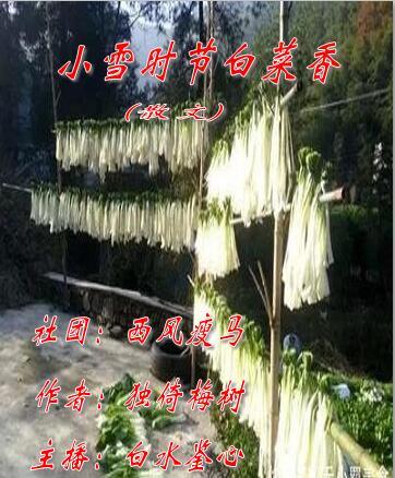 小雪时节白菜香(散文)