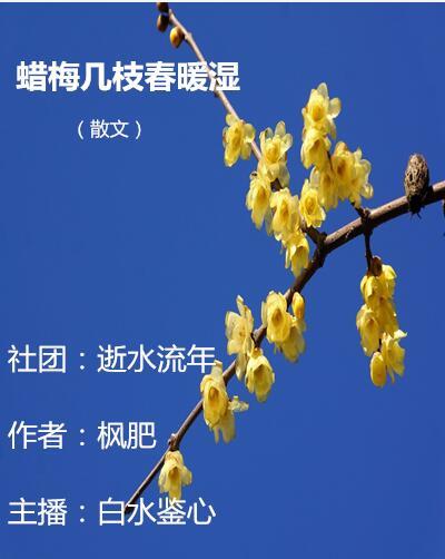 蜡梅几枝春暖湿(散文)
