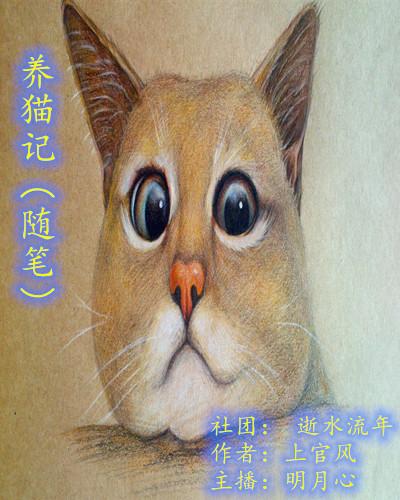 养猫记(随笔)