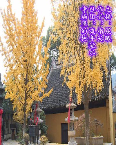 寺庙里的树(散文)