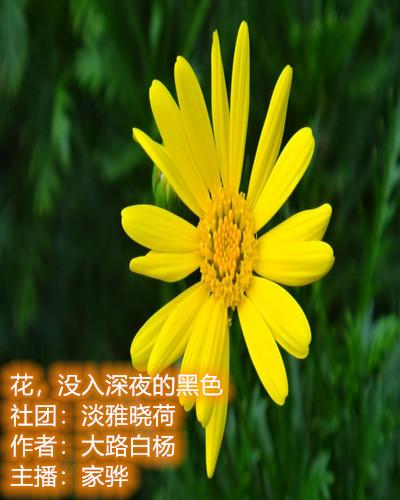 花,没入深夜的黑色(散文)