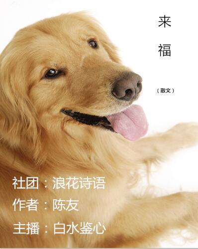 来福(散文)