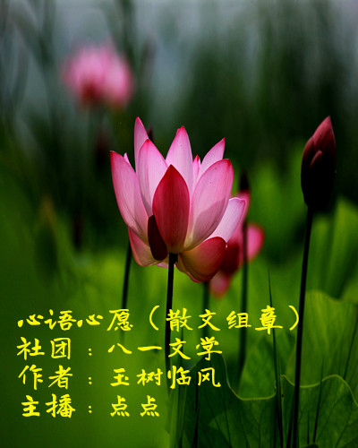 心语心愿(散文组章)