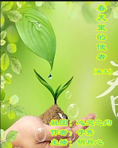 春天里的使者(散文)